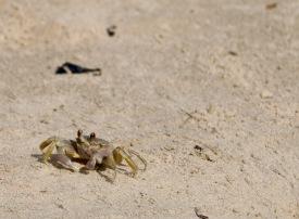 The Crab Walk